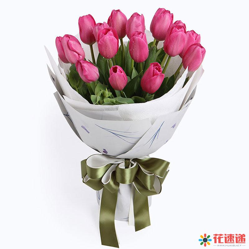 温婉动人_玫红色郁金香19枝,叶上花5枝