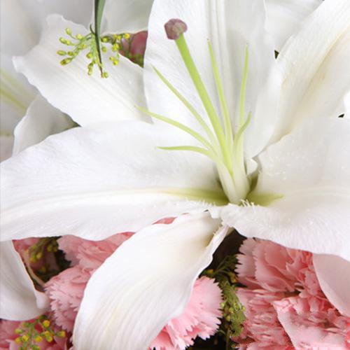 温暖如春_图片4