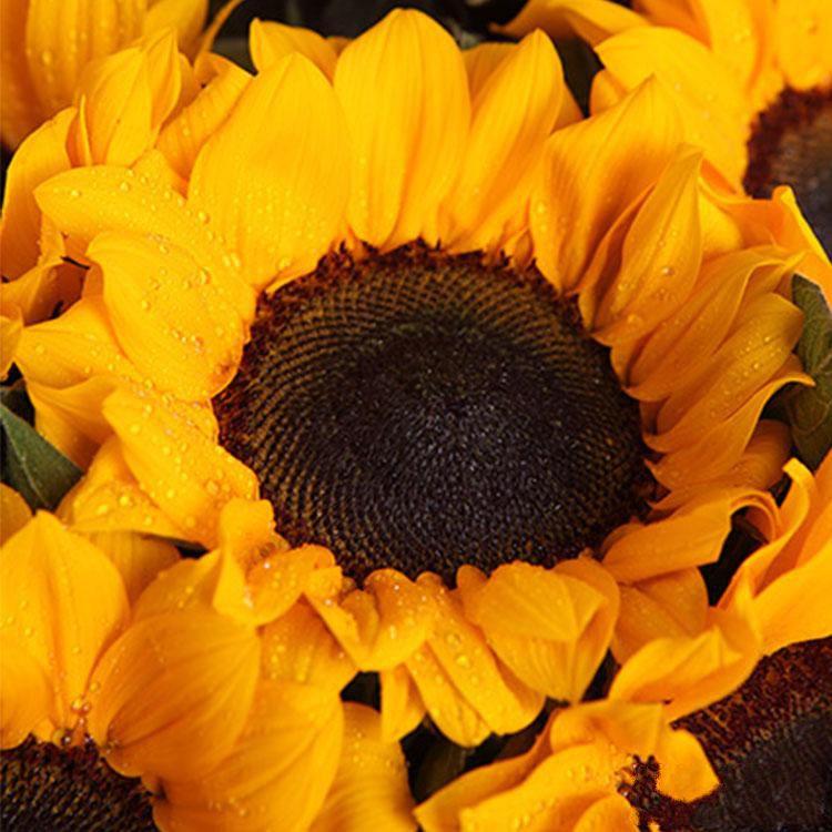 美好祝福_图片4