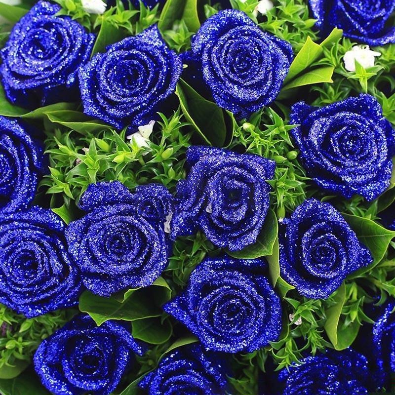 蓝色天使_图片3
